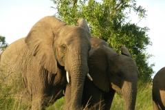 Elephant-Interaction