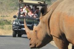 Rhino-Safari-Vehicle